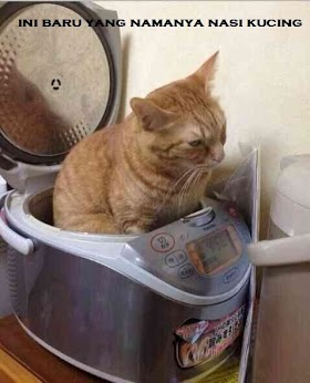 Kucing Lucu Meme