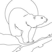 Dibujos Para Colorear Oso Polar Es Hellokids Com