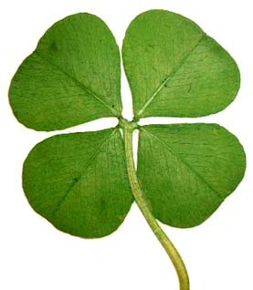 Four Leafed Clover Superstitionsonlinecomsuperstitions Fears