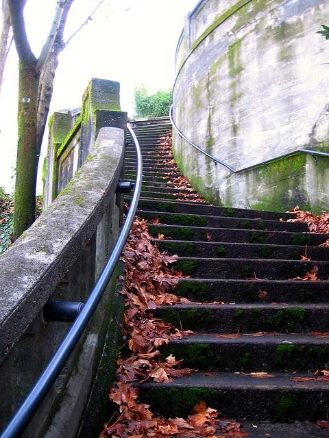 Cedar - Cactus Stairs (2)