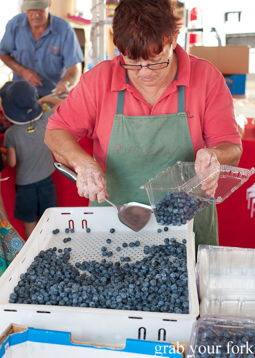 Blueberries at Frenchs Forest Organic Food Market