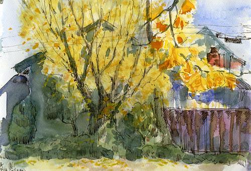 Fall - yellow