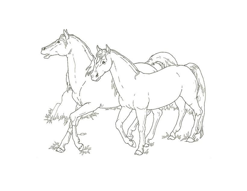 Colorear Caballos 51 Dibujos De Animales Para Colorear Y Pintar En