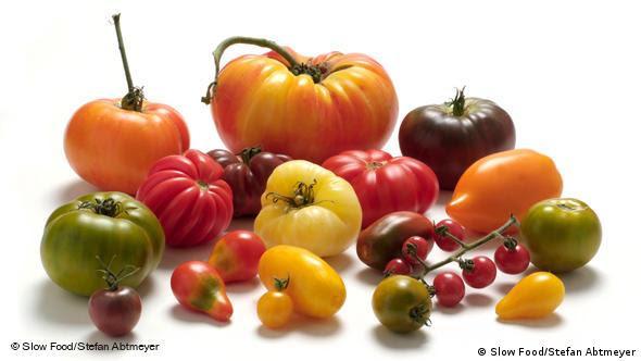 Achtung: Nur für Berichterstattung über Slow Food - Tomaten
