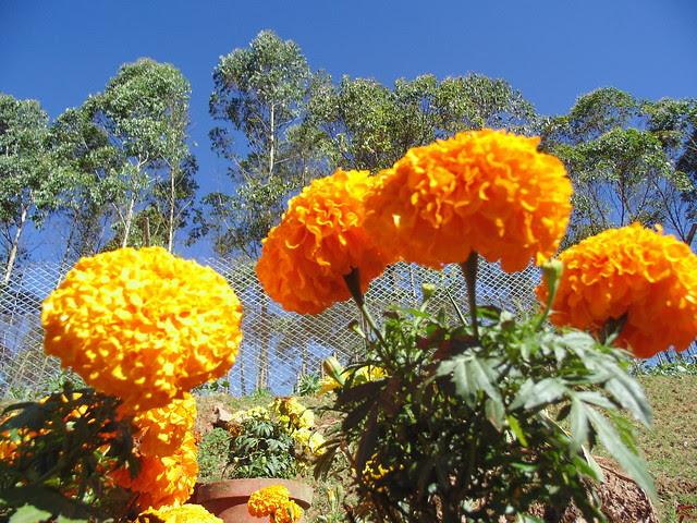 at a flower museum near Munnar, Kerala