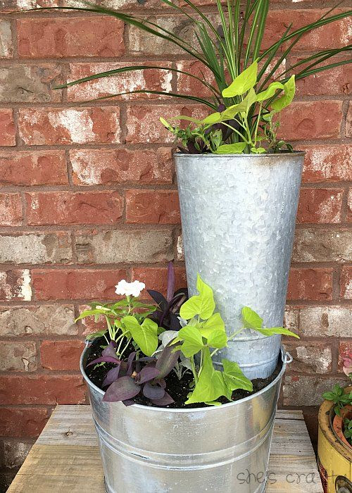 galvanized buckets, sweet potato vine