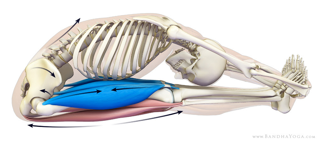 lumbar-pelvic and pelvic-femoral rhythym - paschimottanasana