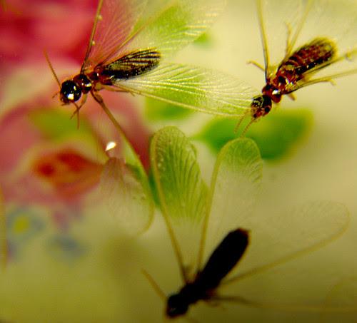 Termites Attack 1