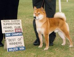 Champion Kenji