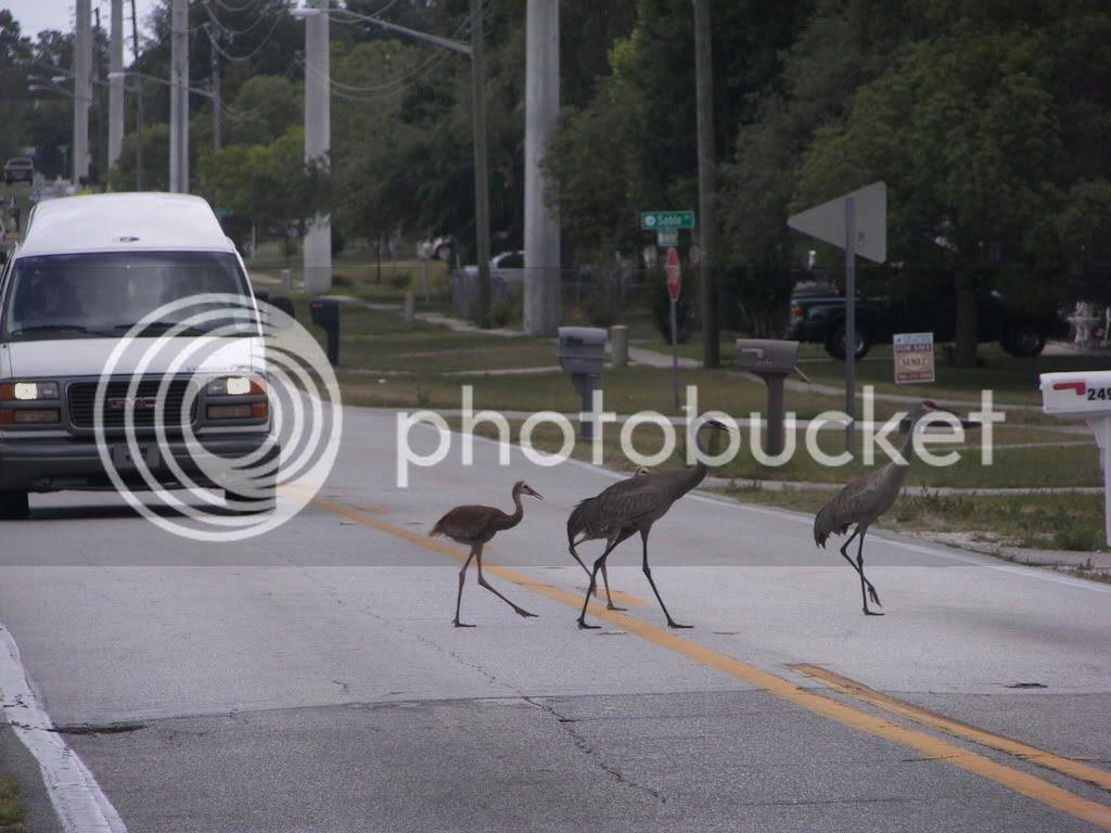 COOLEST BIRDS IN FLORIDA!!