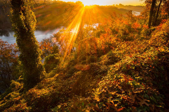 The sun straks through the fall foliage at sunriese along the Potomac River in Arlington, Va., Wednesday, Nov. 4, 2015 on a warm fall day in the nation's Capitol area. (AP Photo/J. David Ake)