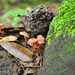 9-mushrooms-DSC_3524
