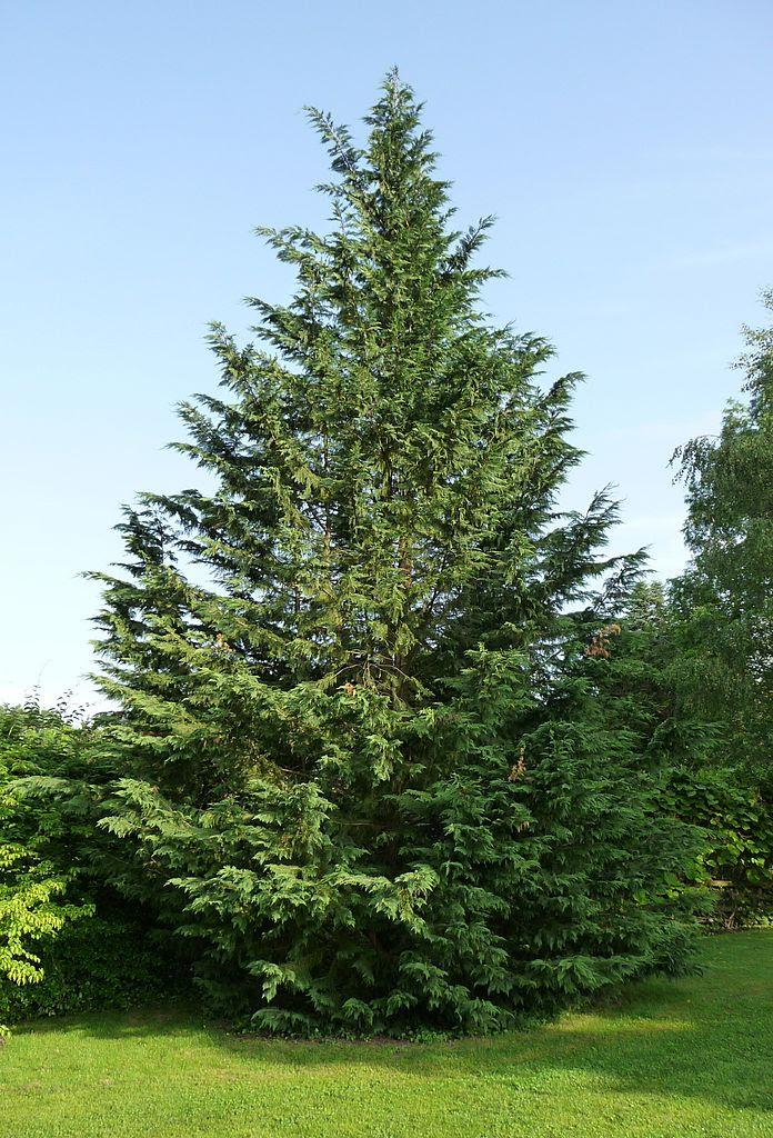 leyland pruning