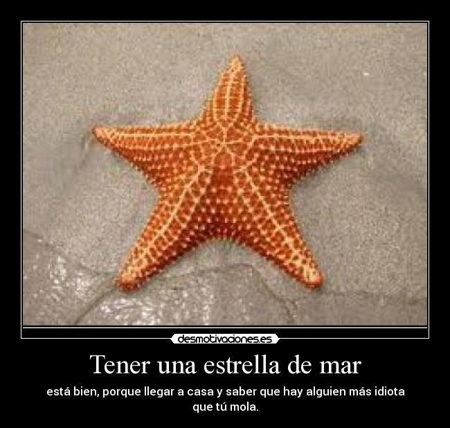 Tener Una Estrella De Mar Desmotivaciones