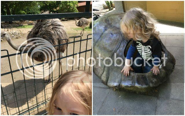 Zoo Krefeld - Nandu + Schildkrötenpanzer