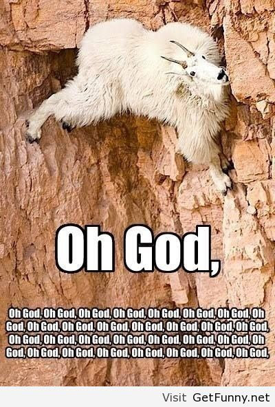 Funny Mountain Goat Funny Pictures Funny Quotes Image 1050098