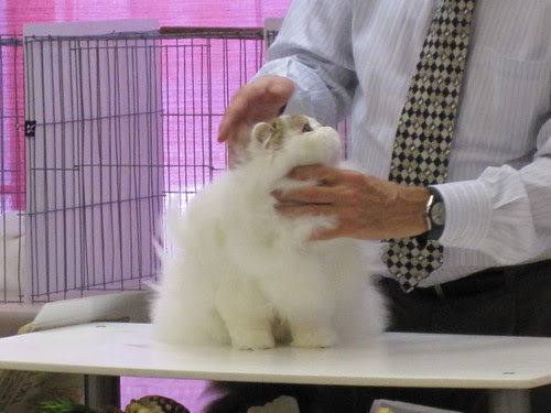Santa Monica Cat Show - Tiki Time!