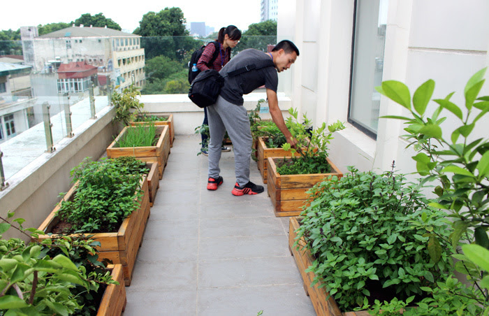 rau sạch, đại gia, Hà Thành, sân thượng, làm vườn, tưới nước tự động, rau-sạch, đại-gia, hà-thành, làm-vườn, sân-thượng, tưới-nước-tự-động