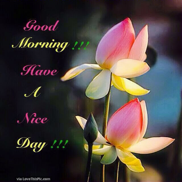 Good Morning Flowers Have A Nice Day Pictures Photos And Images