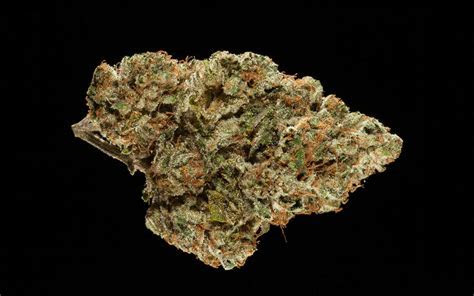 Winners of the 2017 NorCal Cannabis Cup