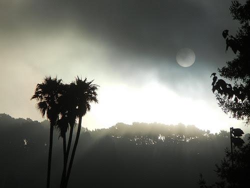 DSCN9201 _ Fog & Sun, Berkeley, CA
