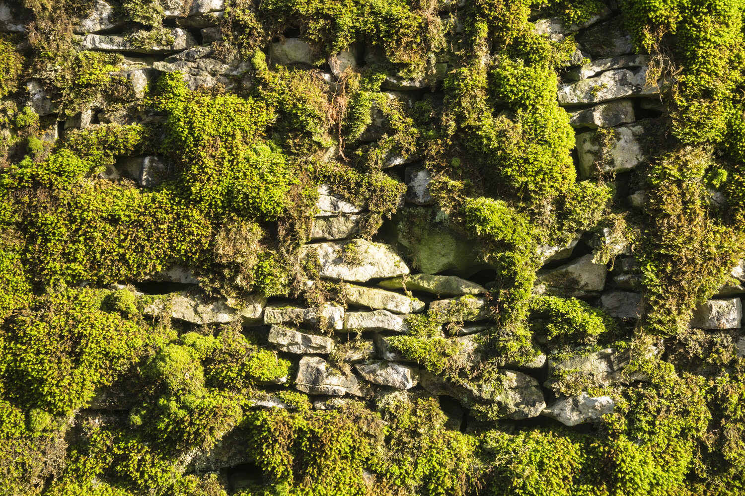 Selecting A Green Wall For Your Residential Or Commercial Project