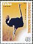 Common Ostrich Struthio camelus