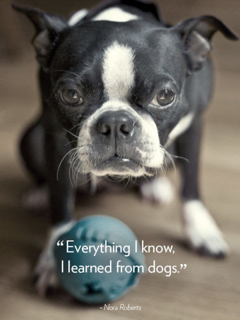 """Everything I know, I learned from dogs."" —Nora Roberts"