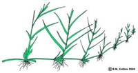 image53 Reproduksi Vegetatif pada Tumbuhan