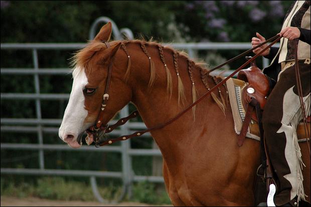 Gibt Es Schöne Frisuren Machbar Für Einflechtm Das Spanische Pferd