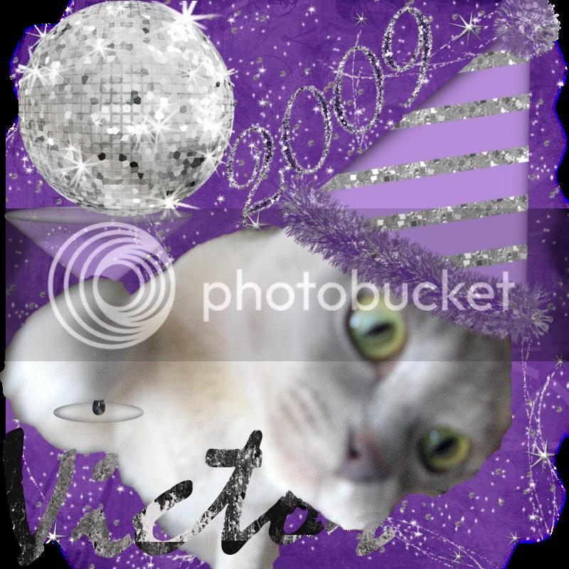 Burmese Cat,Happy New Year
