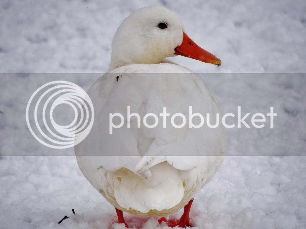photo s5_zps0b72f1bc.jpg