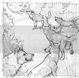 sketch,art,wolf,wolves,moon,mystical,moonlight,woods,forest