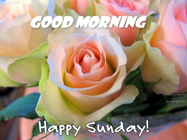 Good Morning Happy Sunday Pictures Photos And Images For Facebook