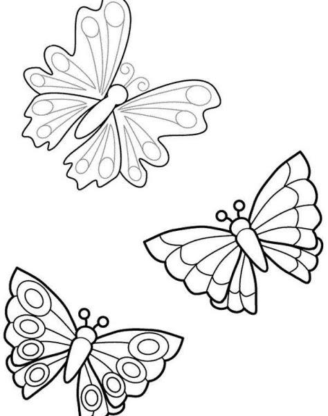 Immagini Di Farfalle Colorate Da Stampare Stampae Colorare
