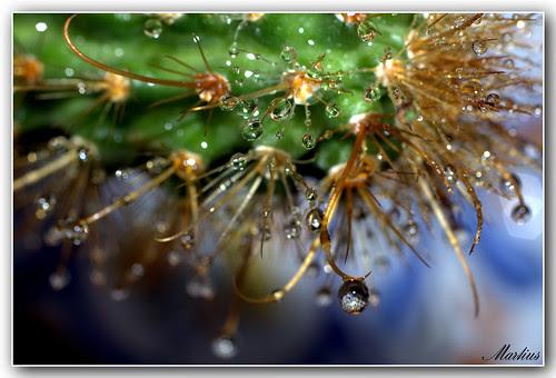 gotas de agua