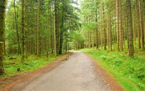 hd forest trees nature roads high resolution pictures