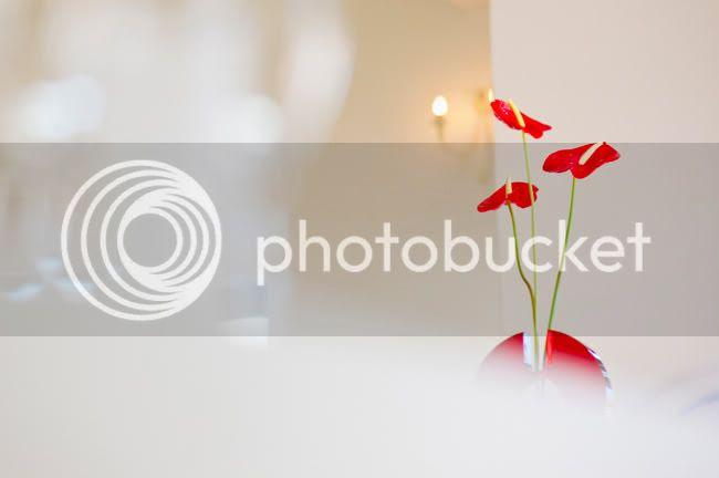 http://i892.photobucket.com/albums/ac125/lovemademedoit/welovepictures/DeKleineValleij_KH_008.jpg?t=1330348561