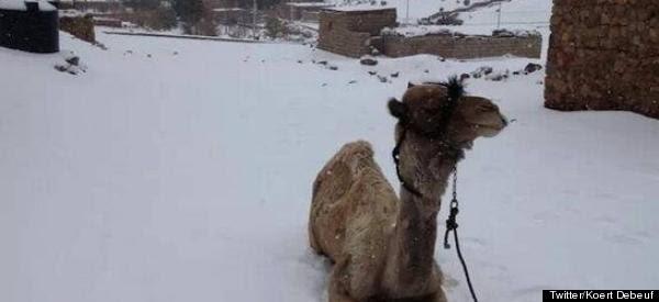 http://i.huffpost.com/gen/1514806/thumbs/r-CAIRO-SNOW-600x275.jpg