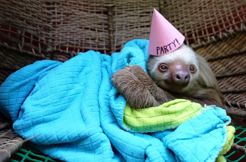 Happy Birthday Mr Sloth Garrbeeleayaydraar Chyeah I Know Right