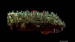 Finalistas de concurso fizeram imagens em vários países mostrando enchentes, poluição e favelas