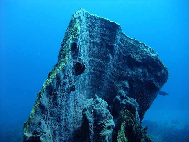 Half of a barrel sponge