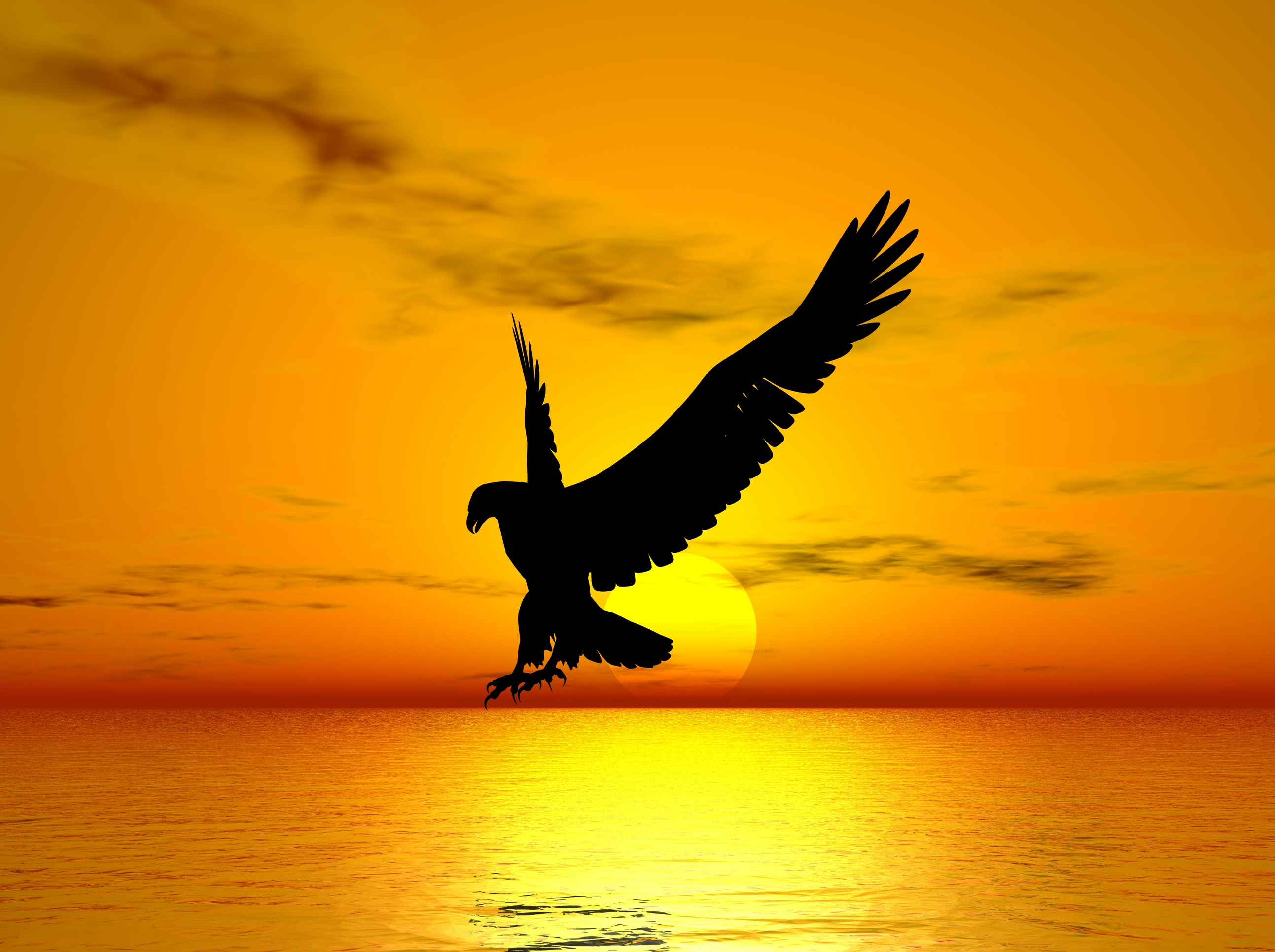 eagle soaring through the sunset