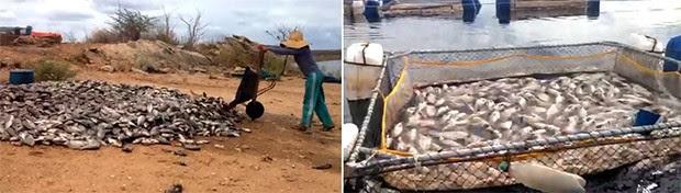 Colônia de pescadores calcula prejuízos de mais de R$ 1 milhão com a mortandade dos peixes (Foto: Renato Medeiros)