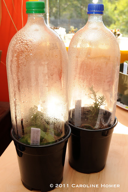 Soda bottle greenhouses