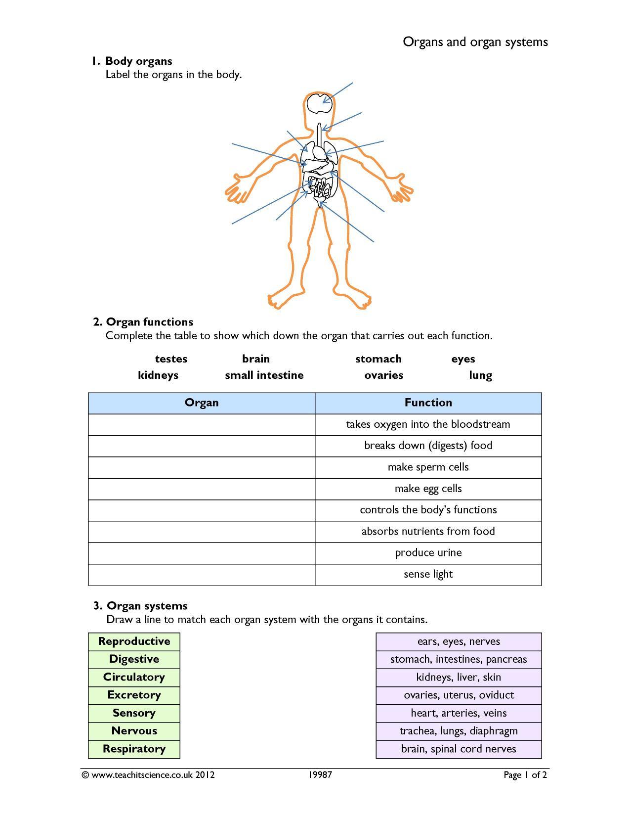 Organs and organ systems - Human biology (KS3)