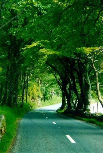 Road near Kylemore Abby