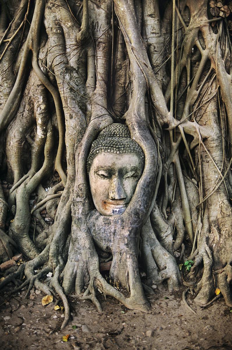 http://stevemccurry.files.wordpress.com/2013/10/thailand-10008nf.jpg