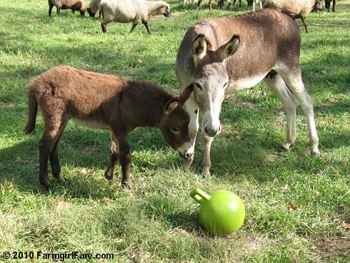 Donkey Ball 2