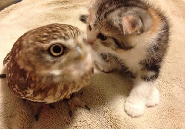 Amizade entre coruja Fuku e o gatinho Marimo chama atenção dos visitantes  (Foto: Reprodução/Facebook/Hukulou Coffee)